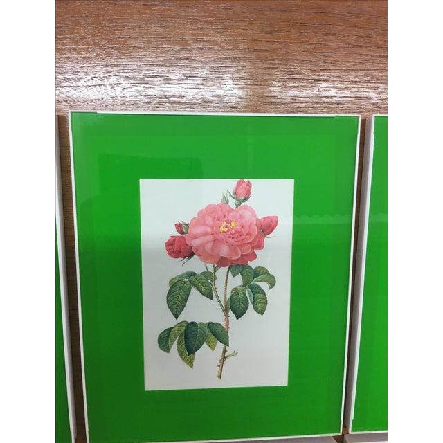 Framed Rose Botanical Prints - Set of 8 - Image 10 of 10
