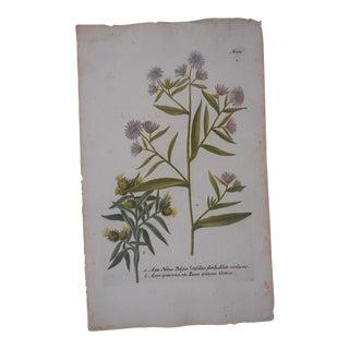 Johann Weinmann Botanical Mezzotint C. Folio size For Sale
