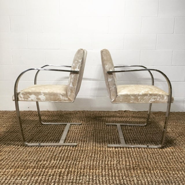 1950s Forsyth One of a Kind Mies Van Der Rohe Brno Chairs for Knoll in Brazilian Cowhide - Pair For Sale - Image 5 of 6