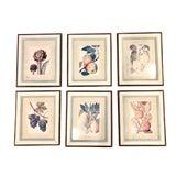 Image of Framed Botanical Prints - Set of 6 For Sale
