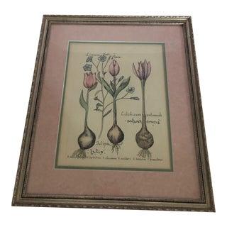 Vintage Tulip Botanical Illustration in Gold Frame For Sale