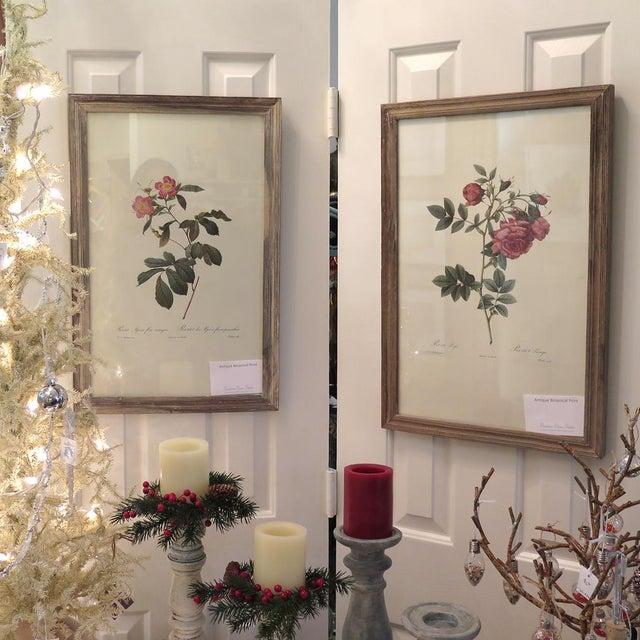 Antique Botanical Rose Print - Image 5 of 5