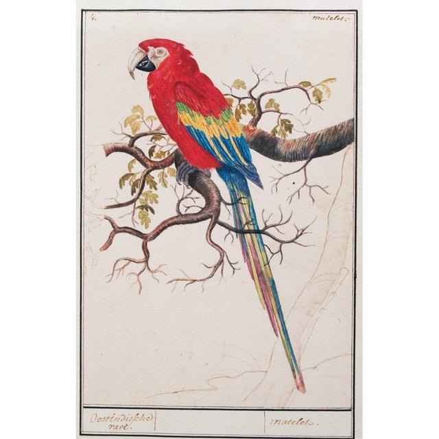 """Printmaking Materials 1590s Small """"Scarlet Macaw"""" Print by Anselmus De Boodt For Sale - Image 7 of 7"""