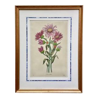 "Antique Botanical Asters Engraving-Custom Matted & Framed-20""x 26"" For Sale"