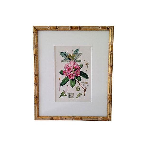 Antique Van Houtte Botanical Lithograph - Image 1 of 4