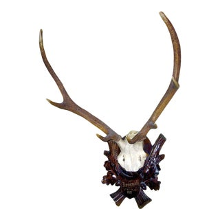 Early Deer Antler Mount on Black Forest Carved Wood Plaque For Sale