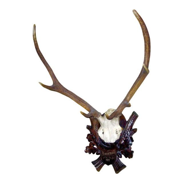 Early Deer Antler Mount on Black Forest Carved Wood Plaque For Sale