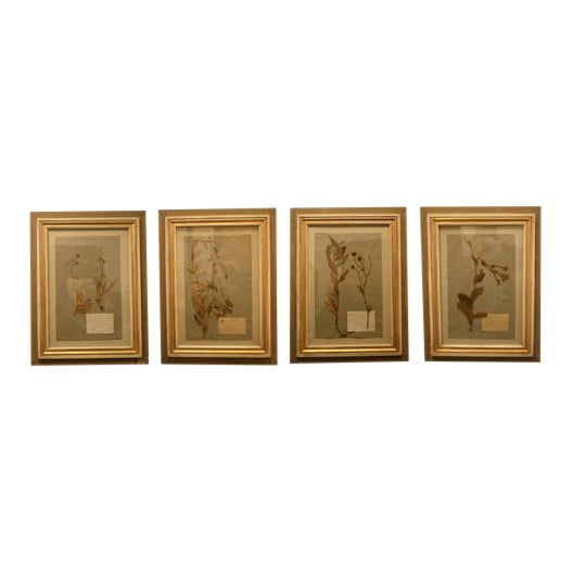 Small 19th Century Framed Pressed Botanicals - a Pair | Chairish