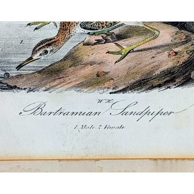 1940s 1940s John James Audubon Hand-Colored Bartramian Sandpiper Lithograph by Jt Bowen For Sale - Image 5 of 8