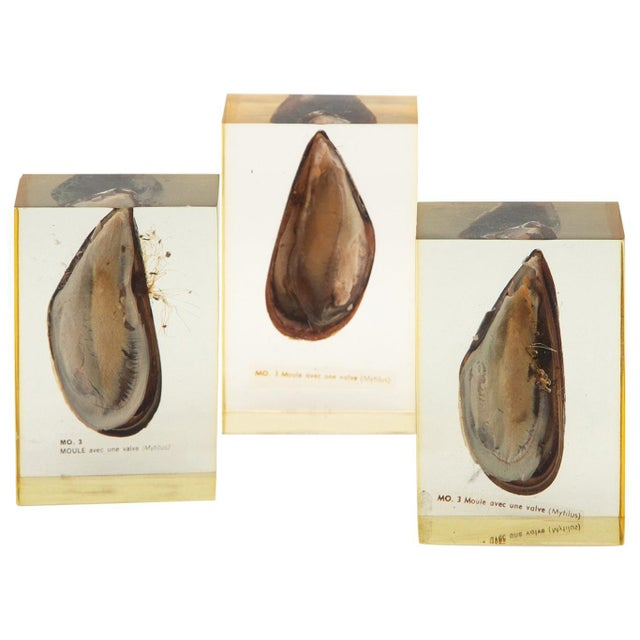 Mid 20th Century Pierre Giraudon Mussels Encased in Resin - Set of 3 For Sale - Image 5 of 5