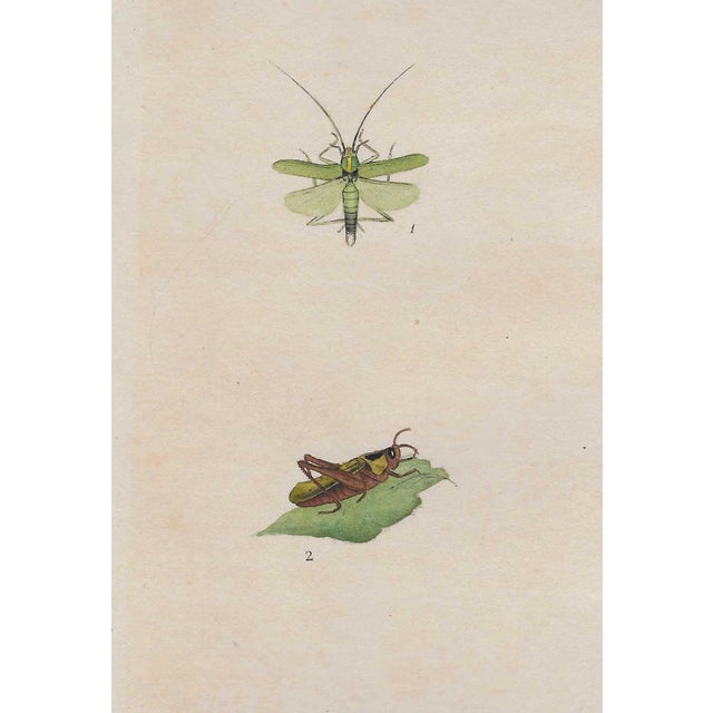 Early 19th Century Antique English Insect Handcolored Engraving For Sale - Image 5 of 5
