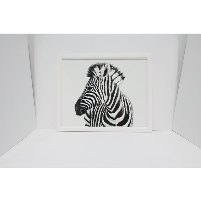 English Black and White Zebra Animal Photo Print With White Frame For Sale - Image 9 of 9