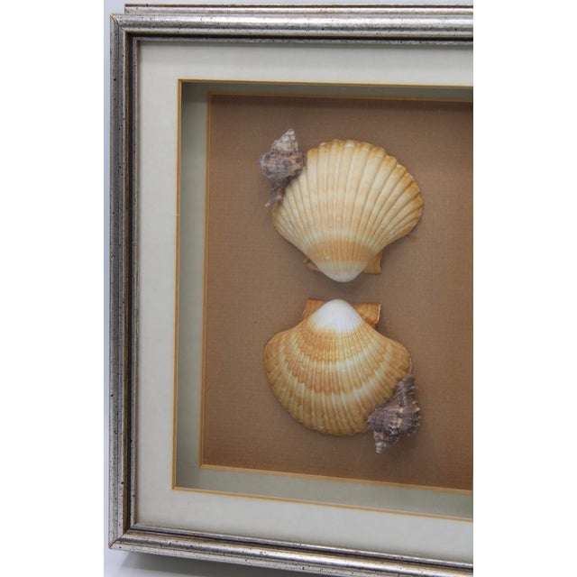 Coastal Vintage Framed Seashell Collage For Sale - Image 3 of 6