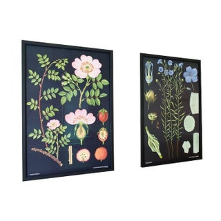 Large Framed Botanical Prints in Rose and Flax