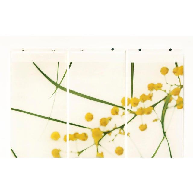 Jeri Eisenberg creates nature inspired works in single panels, diptychs and triptychs. Her soft colored photographic...