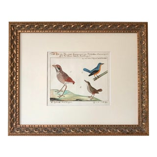 Antique Watercolor Birds Ornithological Study 18th Century For Sale