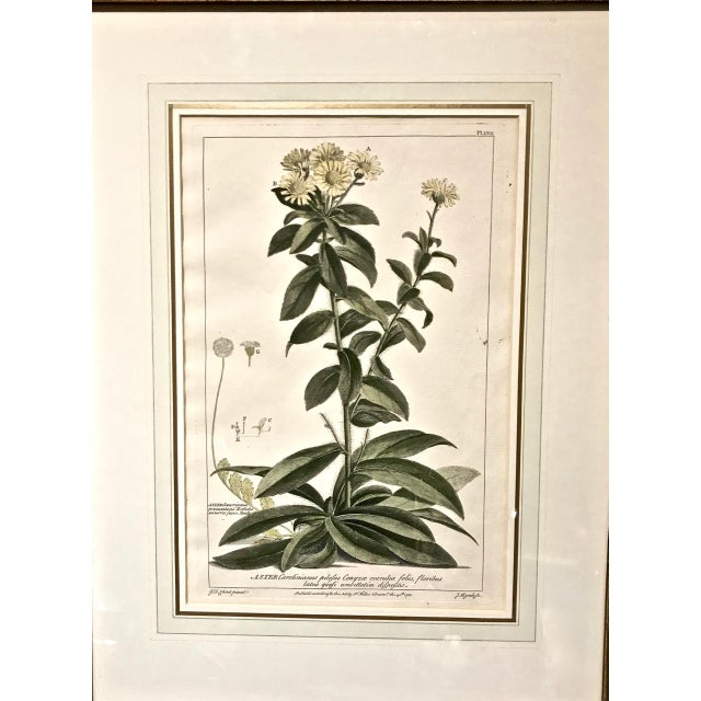 18th C. Botanical Engravings - Set of 4 For Sale - Image 4 of 10