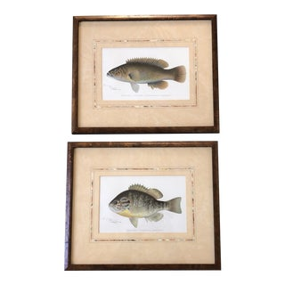Vintage Original Fish Colored Lithograph Prints by S. F. Denton Burled Wood Frames- a Pair For Sale