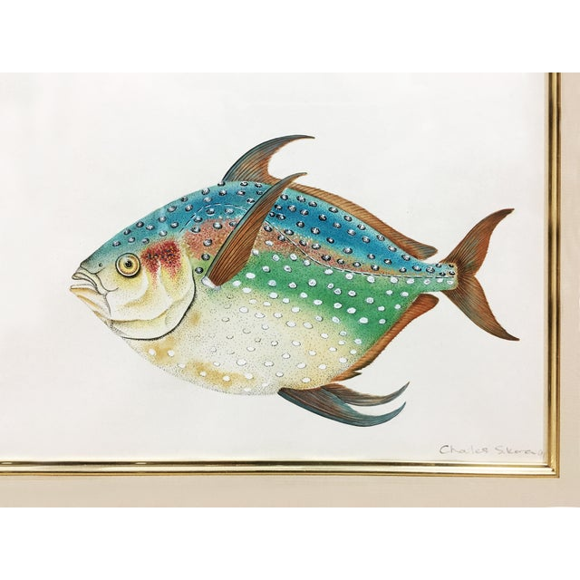 Illustration Rainbow Porgy & Sea Robin Goauche Painting With Gold Frame For Sale - Image 3 of 5
