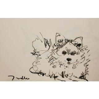 Jose Trujillo Original Charcoal Paper Sketch Drawing, Dog Pomeranian Portrait Art - 11x17 For Sale