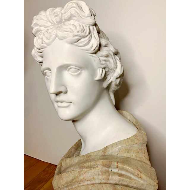 Stone Italian Marble Bust of Appollo Belvedere For Sale - Image 7 of 12