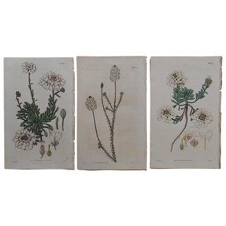 Antique Botanical Engravings - Set of 3 For Sale
