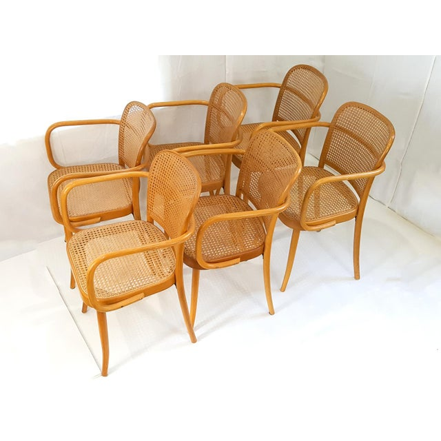 Vintage Stendig Cane Bentwood Dining Chairs- Set of 6 For Sale - Image 6 of 12