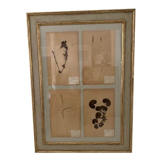 Antique French Framed 4-Piece Botanicals For Sale