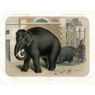 Elephants at a Paris Zoo, 1850s Lithograph For Sale