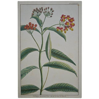 "Rare 18th Century Hand Colored Botanical Engraving Plate LXXXVI From ""Jardin D'Eden"" by Pierre Joseph Buchoz For Sale"