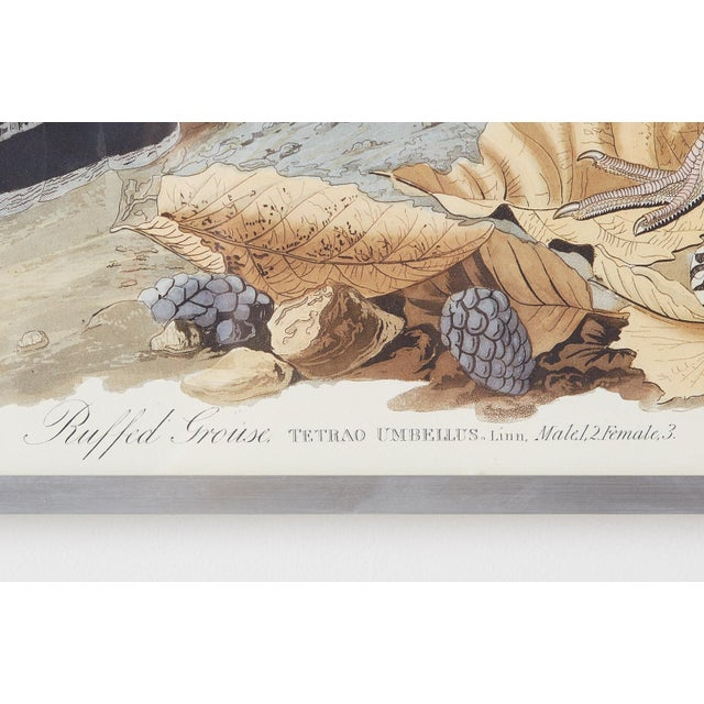 Audubon Ruffed Groüse Plate #41 Havell Edition For Sale In San Francisco - Image 6 of 12