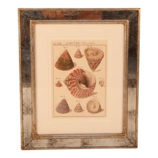 Mirrored Frame St. Kitts Shells Print