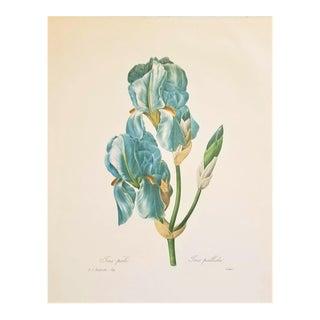 Pierre-Joseph Redouté Reproduction Blue Iris Botanical Print For Sale