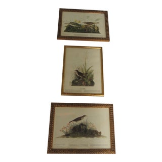 Set of 3 Bird Prints Framed in Gold Frames For Sale