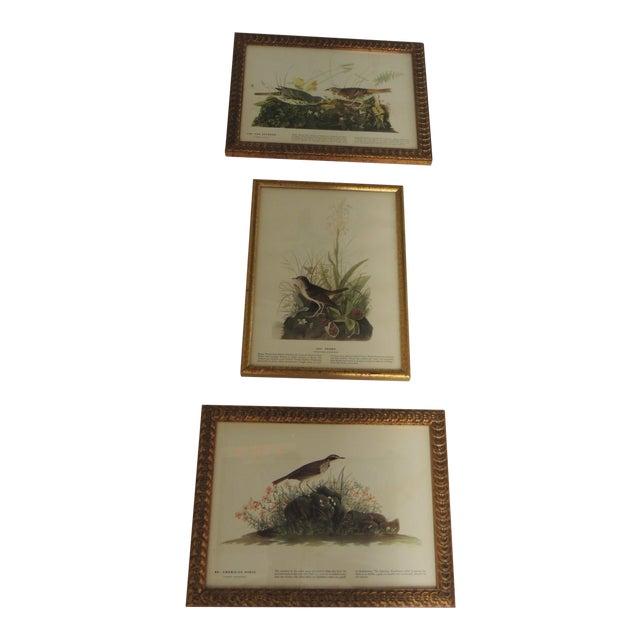 Set of 3 Bird Prints Framed in Gold Frames For Sale