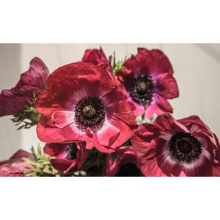 Hues: Anemone Mistral III, 2020' Contemporary Photograph by Claiborne Swanson Frank, 40x30