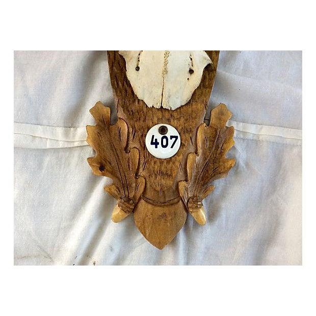 Black Forest Deer Horn Trophy Mount - Image 3 of 5