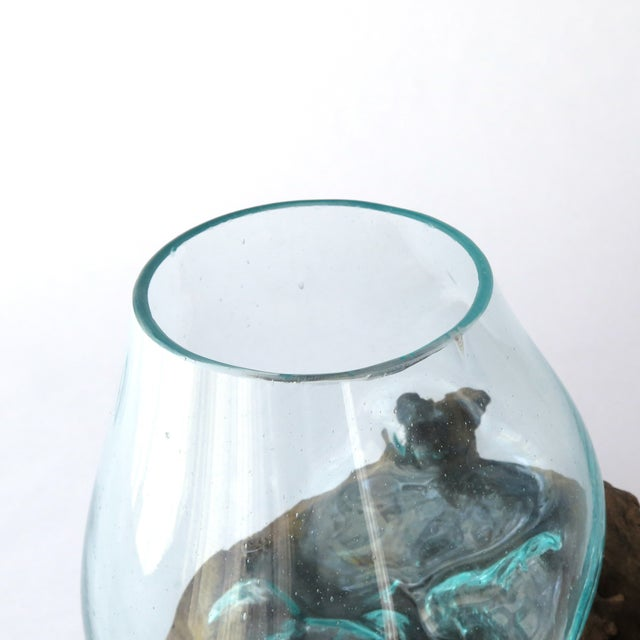 Glass on Teak Driftwood Terrarium - Image 5 of 7