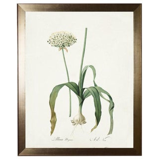 Allium Print in Flat Metallic Moulding For Sale
