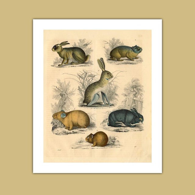 Antique 'Small Animals' Archival Print - Image 4 of 4