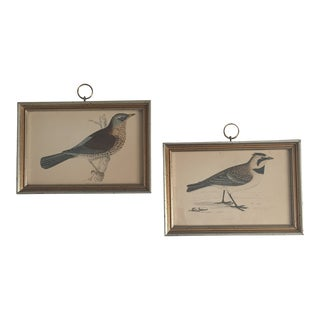19th Century Framed English Avian Engravings - a Pair For Sale