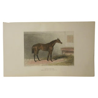 Antique Horse/Equine Engraving For Sale