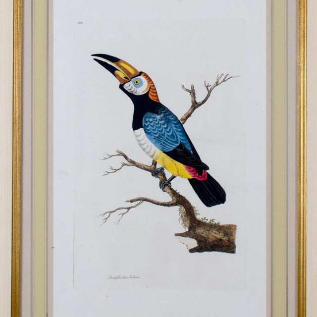 Late 18th Century 1796 English Traditional John Frederick Miller Parrot Engravings - Set of 4 For Sale - Image 5 of 12