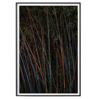 """Bamboo (Vertical)"" Unframed Photographic Print For Sale"