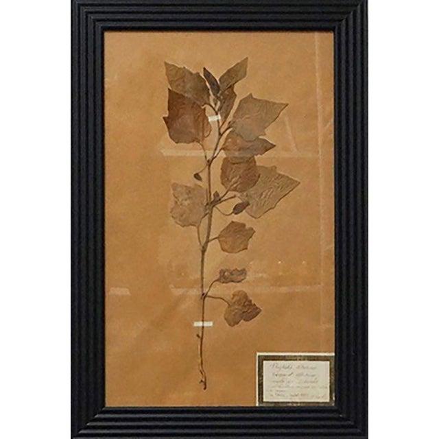 French Framed Botanicals - Set of 8 For Sale - Image 4 of 10