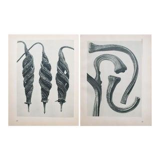 Karl Blossfeldt Double Sided Photogravure N23-24