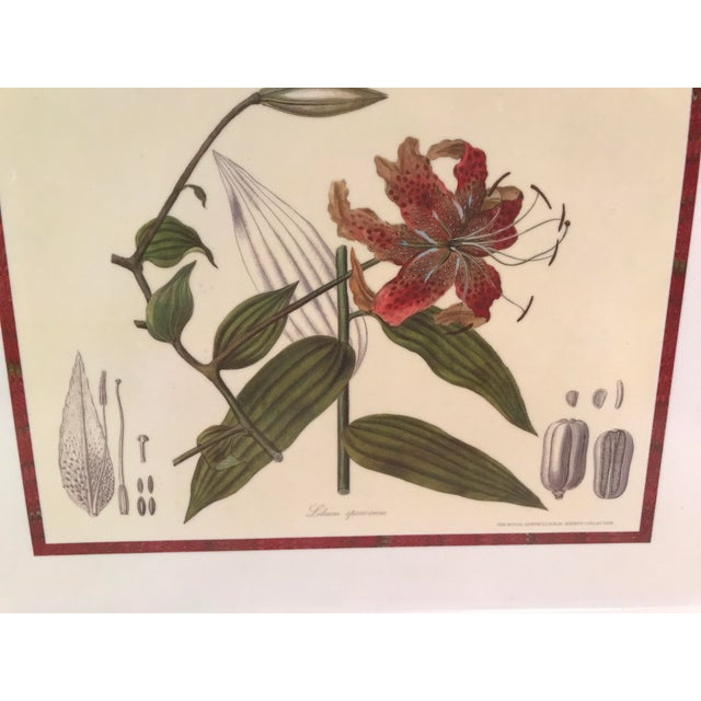 Vintage Royal Horticulture Society Collection Tray For Sale - Image 4 of 11