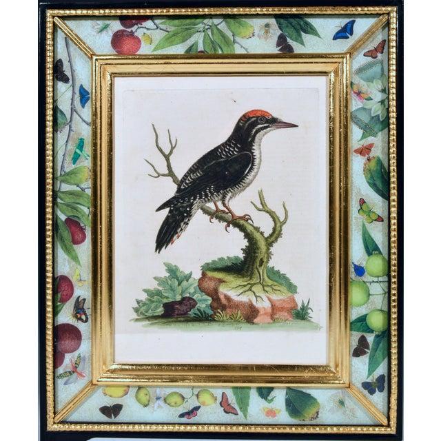 George Edwards Engravings of Birds, Set of Twelve, Circa 1740-60. (Ref: 9118/PCRR) Twelve different bird engravings within...