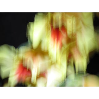 Contemporary Fine Art Photographic Abstract Flower Print For Sale