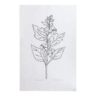 """Original Vintage 1978 Black and White Botanical """"Marshmallow"""" Drawing Unframed on Paper Signed Betsey Tryon For Sale"""